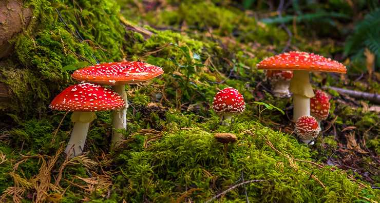 How Mushrooms can Improve Your Skin